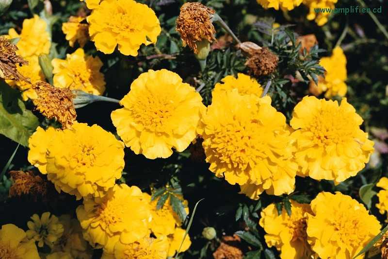 fotos gelbe blumen und pflanzen photos of yellow flowers. Black Bedroom Furniture Sets. Home Design Ideas